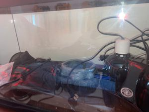 20 gallon tank for bearded dragon with light carpet hammock food/water bowl and heating pad or you can just get the tank for Sale in Newington, CT