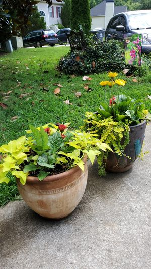 Flowering Plants with Pots for Sale in Powder Springs, GA