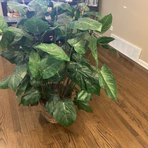 Fake House Plant for Sale in Bellwood, IL