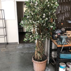 Fake Plants for Sale in Moreno Valley, CA