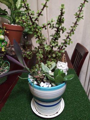 Succulents en maceta chica de cerámica for Sale in Bell, CA
