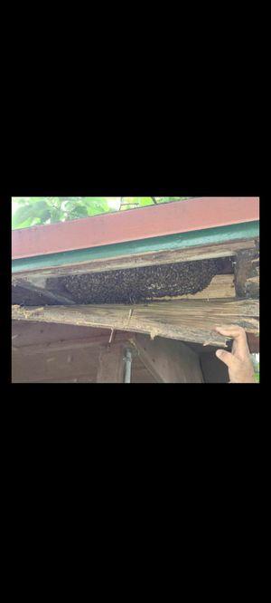 Got bees? for Sale in Miami, FL