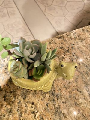 Succulent turtle 🐢 pot for Sale in Jurupa Valley, CA