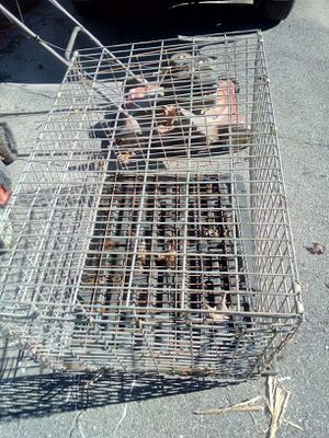 Dog crate for Sale in Thomasville, NC