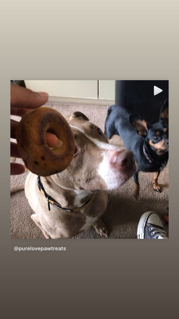 Dog Gourmet Treats