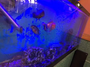 Fish tank 50 gl for Sale in Brentwood, TN