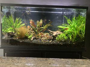 Aquarium setup $450 for Sale in Silver Spring, MD