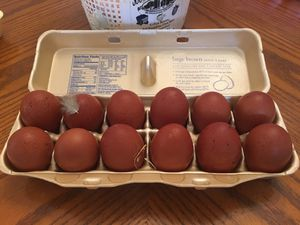 Eggs ( French black copper Moran's) for hatching for Sale in Covington, GA