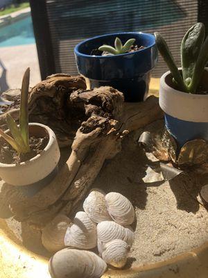 Live Succulent Plant Display for Sale in Phoenix, AZ