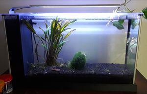Fluval Spec5 5 gallon nano aquarium w/built in filter for Sale in Utica, MI