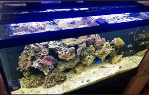 """(2) Fluval 2.0 Reef/marine 48""""-60"""" lights with WiFi controller for Sale in Newport News, VA"""