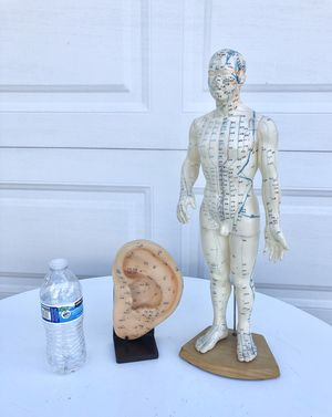 2 acupuncture models for Sale in Rancho Cucamonga, CA