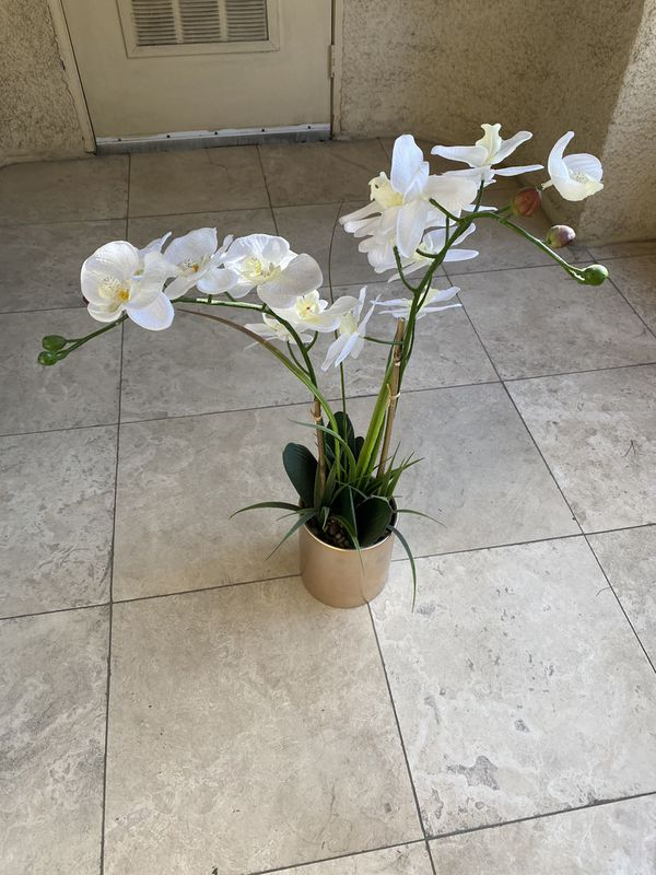 Plant for Inside Apartment