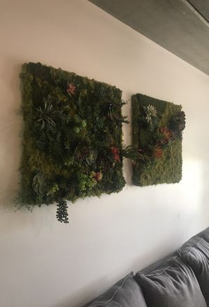 Succulent Wall Decor for Sale in Clermont, FL