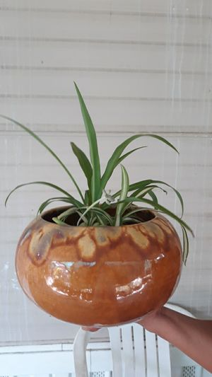 Plant and ceramic pot ( vintage ) for Sale in Chino, CA