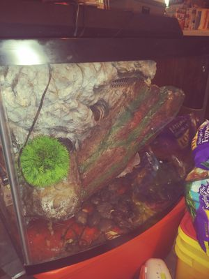 20 gal tank/aquarium for Sale in Knoxville, TN