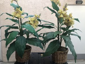 Fake plants for Sale in San Fernando, CA