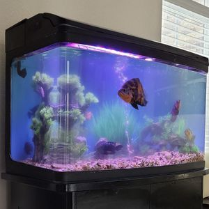65 Gallon Acrylic Aquarium w/ hood & Filter For Sale for Sale in Humble, TX
