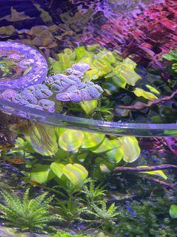Innovative Marine Aquarium Fish Tank for Sale in La Palma,  CA