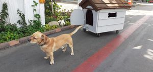 Dog house for Sale in Anaheim, CA