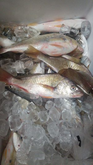 Pescado fresco for Sale in South Houston, TX