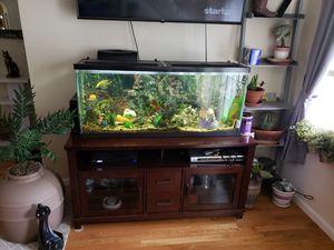 55 Gallon Fish Tank (fish included) for Sale in Attleboro, MA