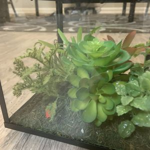 Home Plant for Sale in Virginia Beach, VA