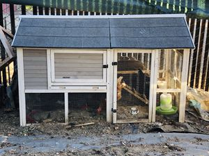 (PENDING PICK UP). Free 4 egg laying chickens with coop. Chickens lays at least 3-4 eggs a day. Must take all. for Sale in Tracy, CA
