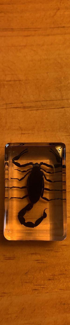 Scorpion Model for Sale in Islip Terrace, NY