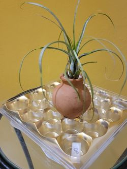 Airplant for Sale in Fort Lauderdale,  FL