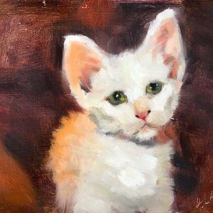Moroccan Kitten for Sale in Lambertville, NJ