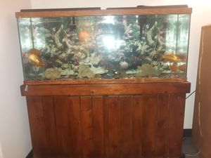 Fish tank with fishes for Sale in Lawrence, MA
