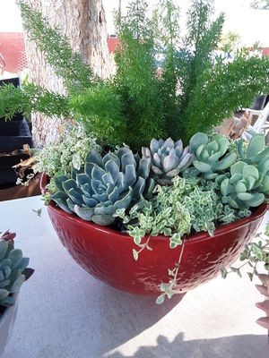 """10"""" ceramic pots with variety of succulent plants $22 each for Sale in Whittier, CA"""