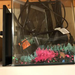 Everything You Need To Get Glofish for Sale in San Jose,  CA