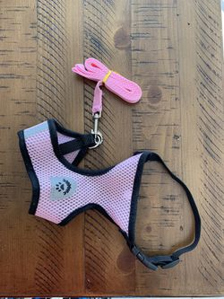 Harness/leash Set for Sale in Charlotte,  NC