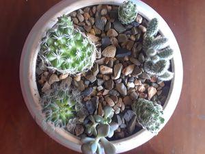 Beautiful pot with plant succulent Cactus arrangement for Sale in Irving, TX