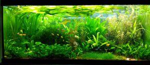 Live aquarium plants, natural fish tank decor and filter for Sale in Virginia Beach, VA