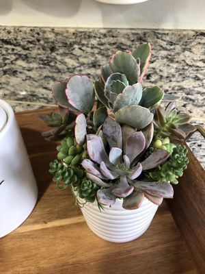 Farmhouse succulent arrangement for Sale in Hacienda Heights, CA