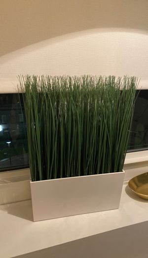 IKEA plant (faux) for Sale in New York, NY