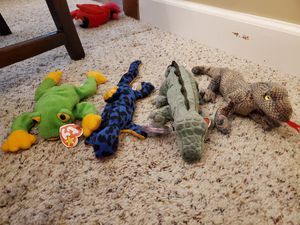 Reptile/Amphibian Beanie Baby lot for Sale in Fenton, MO