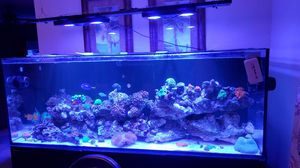 Red sea reefer 450 for Sale in Kissimmee, FL