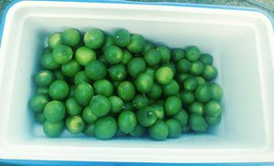Seedless limes for Sale in Chino, CA