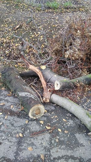 Free fire wood and kindling bring saw for Sale in Stockton, CA