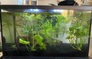 10 Gallon Aquarium for Sale in Cornelius, OR