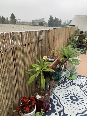 Bamboo slat fencing 11x4 - new for Sale in Torrance, CA