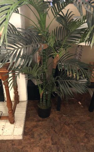 2 palm 5.5 feet tall for Sale in Fresno, CA