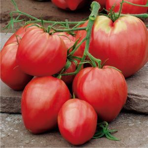 Organic Russian Bull's heart pink and sweet tomato plants for Sale in Aurora, CO