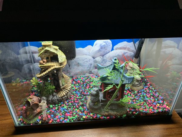 Fish Tank 10' Gallon