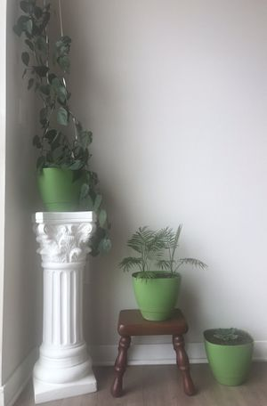 4 plants with pots for Sale in Los Angeles, CA