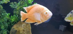 fish tank/fish for Sale in Bakersfield, CA